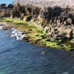 Die Küste vor Rope ist für die reichen Crayfishvorkommen berühmt.