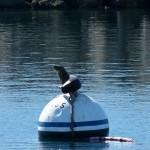 Auch hier im Hafen gibt's Robben
